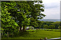 SD6839 : Higher Stoneyhurst Park by Ian Greig
