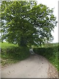 SX6597 : Road south to Taw Green by David Smith