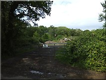 SX6697 : A clearing in the woods near North Wyke by David Smith