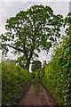 SS9228 : West Somerset : Heleball Lane by Lewis Clarke