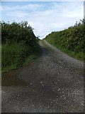 SX6598 : Track west of North Wyke by David Smith
