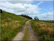 NS5876 : Craigmaddie Muir [2] by Robert Murray