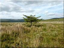 NS5876 : Craigmaddie Muir [9] by Robert Murray