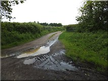 SX6599 : Track to Tawmill by David Smith