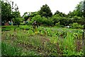 SU8695 : Vegetable bed in the walled garden by Steve Daniels
