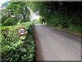 SD3596 : The Road near Esthwaite Lodge by David Dixon
