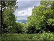 SD4199 : Windermere View from Elleray Wood by David Dixon