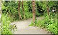 J3675 : Path, Victoria Park, Belfast (June 2014) by Albert Bridge