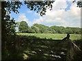 SS4702 : Odham Moor by Derek Harper