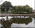 SJ4812 : Weeping willows, Water Lane, Shrewsbury by Jaggery