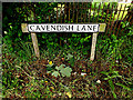 TL8248 : Cavendish Lane sign by Adrian Cable