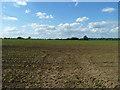 SP8024 : Field of maize by Robin Webster