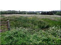 G9828 : Rushy ground, Cordressogagh by Kenneth  Allen
