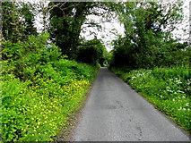 G9727 : Buttercups along the roadside by Kenneth  Allen