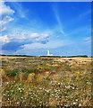TA2570 : Flora, Flamborough Head by Scott Robinson