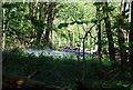 TQ1834 : Bluebells, Morris's Wood by N Chadwick