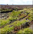 NZ8601 : Barren Moorland, Robbed Howe by Scott Robinson