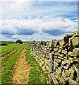 NZ8703 : Dry Stone Wall, Leas Head Road by Scott Robinson