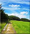 NZ8703 : Farm Track Leading From Leas Head Farm by Scott Robinson