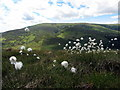 NT9123 : Cotton grass against The Cheviot by Andrew Curtis