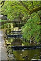 NY8545 : Weirs on River East Allen, Allenheads by Paul Buckingham