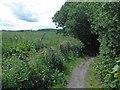 SE2803 : Trans Pennine Trail near Silkstone Common by Steve  Fareham