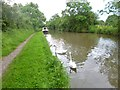 SP3787 : Bedworth, swans by Mike Faherty