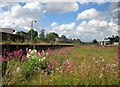 SX8671 : Overgrown siding, Newton Abbot station by Derek Harper