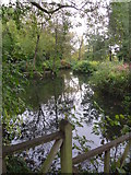TM1645 : Pond in Christchurch park. by steven ruffles