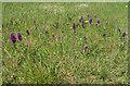 TA2570 : Orchid patch, Flamborough Head by Pauline E