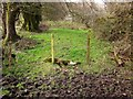 ST4301 : Fence, Lewesdon Hill by Derek Harper