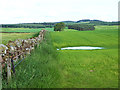 NY5427 : Field and wall near Moorhouses Farm by Oliver Dixon