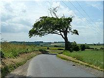 TR2854 : Misshapen tree by Robin Webster