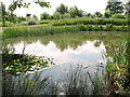 TG0815 : Pond by Rectory Road/Sandy Lane junction by Evelyn Simak