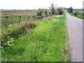NY5376 : Roadside verge south of Blackpool Gate by Rose and Trev Clough