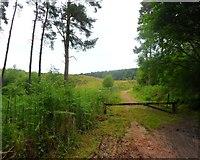 SJ9715 : Badger Slade - Cannock Chase by Anthony Parkes