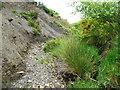 SE0809 : Erosion of shale bank, Swinsey Dike by Humphrey Bolton