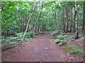 TM4667 : Path in woodland near Westleton Walks, RSPB Minsmere by Roger Jones