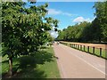 TQ2779 : Sweet chestnut (Castanea saliva) in Hyde Park by David Lally