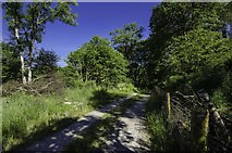 NX5756 : Track to Anwoth Village by Andy Farrington