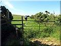 SN0333 : Llwybr Ty'riet Path by Alan Richards