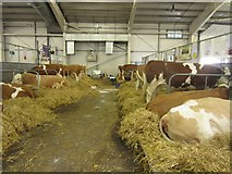 NT1473 : Cattle in the Highland Hall by Graham Robson