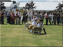 NT1473 : Young sheep handler competition, Royal Highland Show by Graham Robson