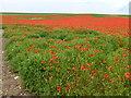 TF7720 : A field of poppies on Massingham Heath, Norfolk by Richard Humphrey