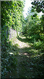 TQ1169 : The Markway - Footpath following Stream by James Emmans