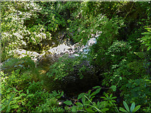 SN7477 : Pool at Bottom of Mynach Falls, Devil's Bridge by Christine Matthews