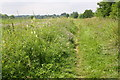 SU5984 : Wild flowers beside The Ridgeway by Roger Templeman
