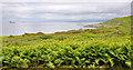 NR6553 : Ferns on Gigha by Stuart Wilding