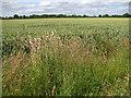 TM2390 : High grass on field margin by Evelyn Simak