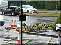 SK5336 : Canada Geese  (Branta canadensis) on Beeston Business Park by David Lally